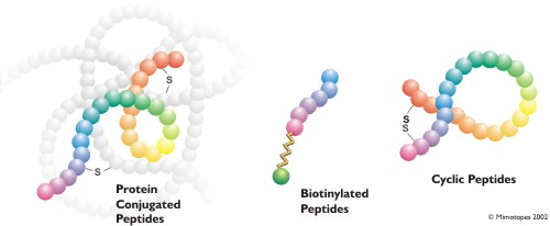 Modified Peptide Examples