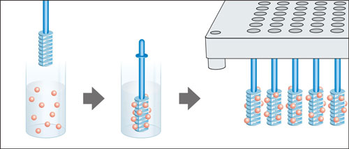 Lanterns mounted on Stems can scavenge solution phase products or unused reagents in parallel